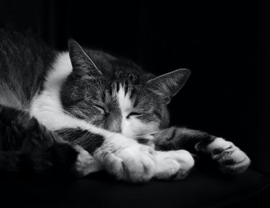 gechillte Katze